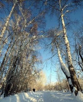 Алтай Синьцзян-Уйгурского автономного района, покрытый снегом