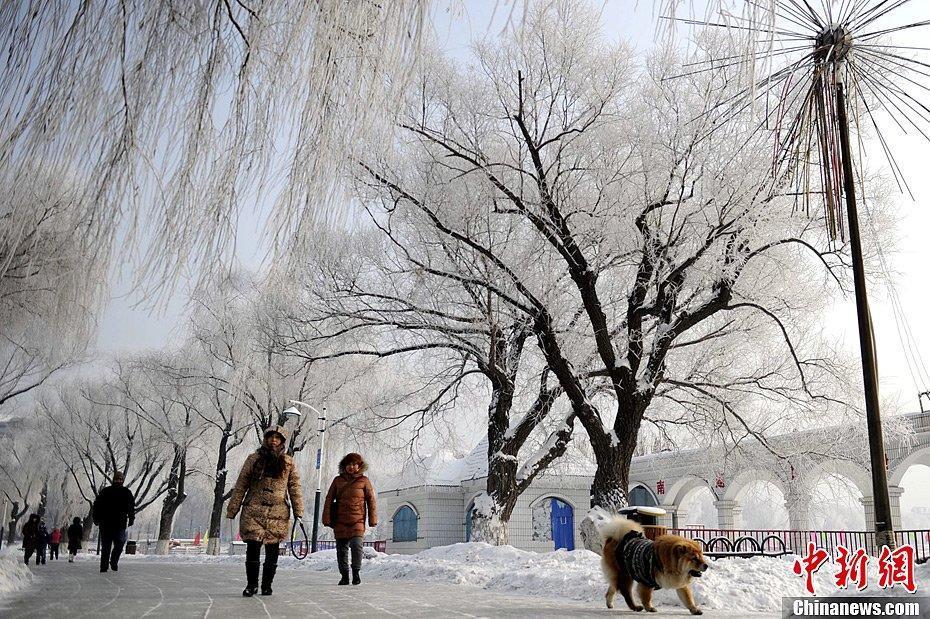Красивые изморози в городе Чанчунь
