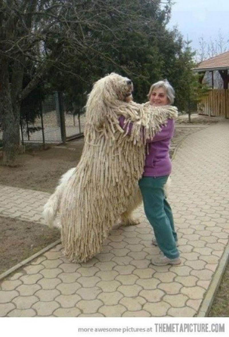 Фото собаки гиганты 6