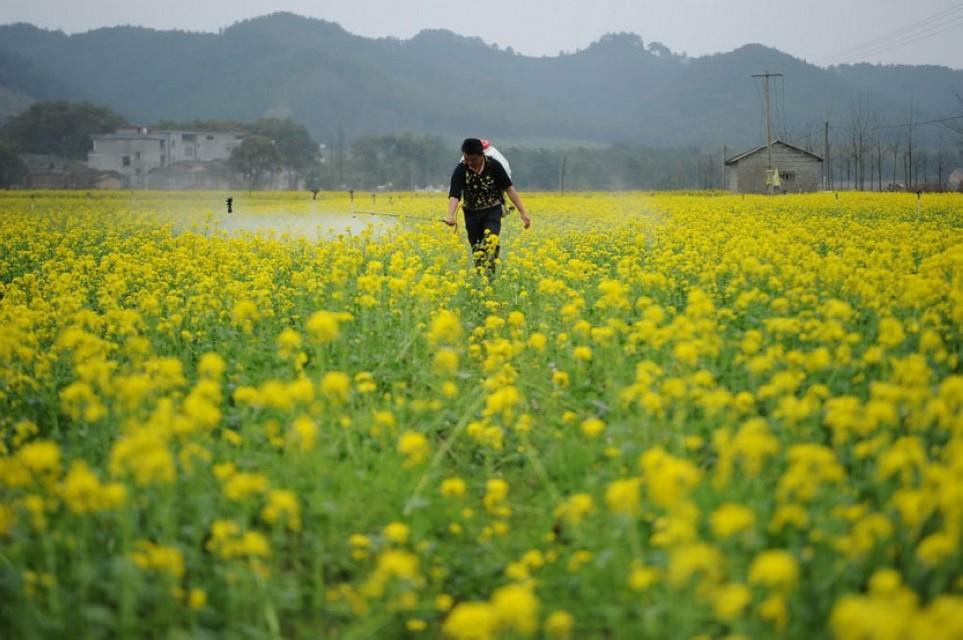 Фото: «Красивый Китай» преображает окружающую среду