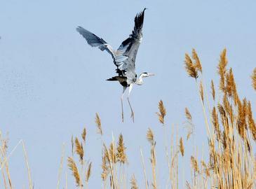 Второй международный фестиваль наблюдения за птицами на озере Шаху