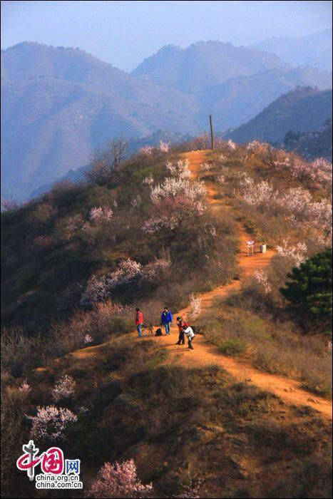 Весенние пейзажи на участке Великой китайской стены Цзиньшаньлин