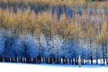 Изморози в горах Тяньшань после снегов
