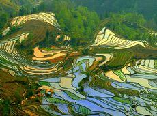 Поля на террасах в Хани на юго-западе Китая внесены в список всемирного наследия ЮНЕСКО