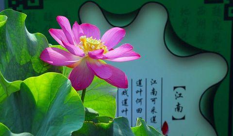 Лето в парке Юаньминъюань – фестиваль лотосов