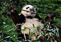 /Вокруг света ради панды/ Во Франции завершилась акция 'Путешествие вокруг света в защиту панды'