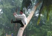Ушуист с кокосовой пальмы стал популярным