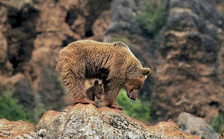 Трогательная материнская любовь через объектив фотокамеры.