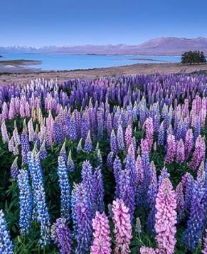 Красивейшие фото южного острова Новой Зеландии