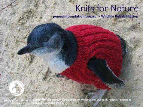 Пингвины в свитерах: не для моды, а для выживания