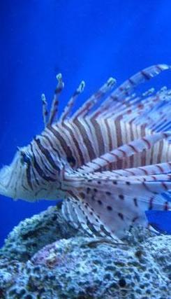Боаоский аквариум2