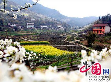 Весенние цветы украшают город Хуаин провинции Сычуань