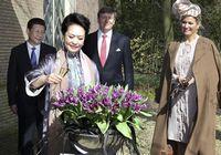 Пэн Лиюань в Нидерландах дала название новому сорту тюльпана