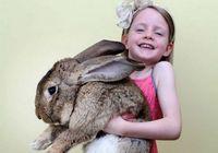 Фото: самый крупный в мире кролик длиной 1 метр и весом 22,5 килограмма