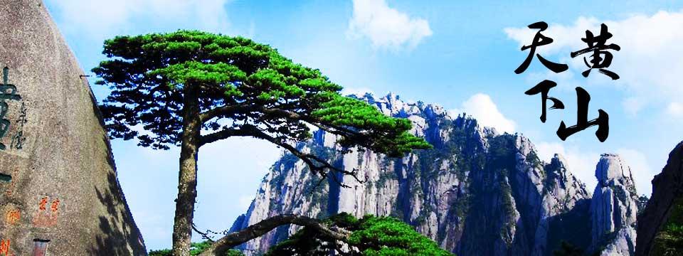 Сосны в горах Хуаншань