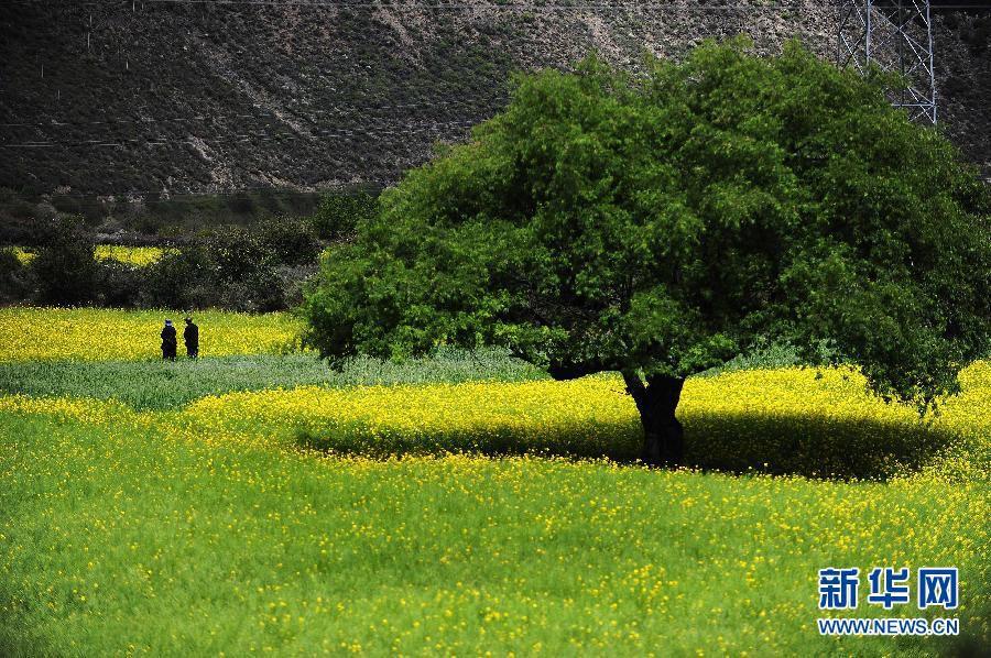 Буколические летние пейзажи в районе Линьчжи Тибета