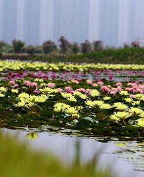Водные растения расцветают летом