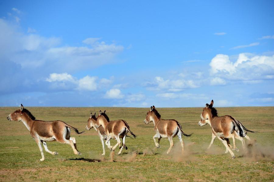 В Тибете наступил туристический сезон