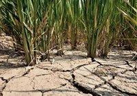 Усиливается засуха в провинции Хэнань, свыше 700 тыс человек испытывают проблемы с обеспечением питьевой водой