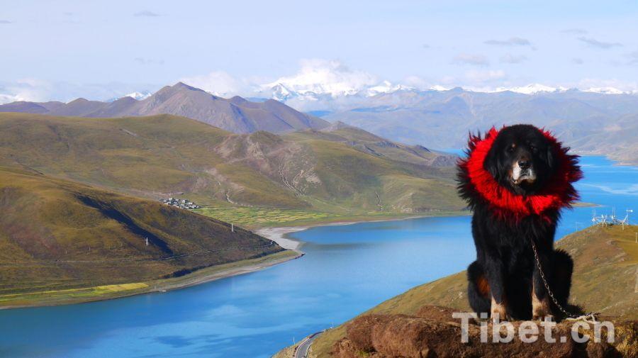 Тибет в объективе малайзийской туристки
