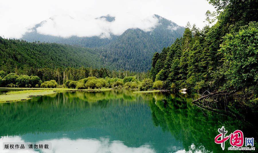 Самый красивый девственный лес – заповедник Ганъюньшаньлинь в Тибете