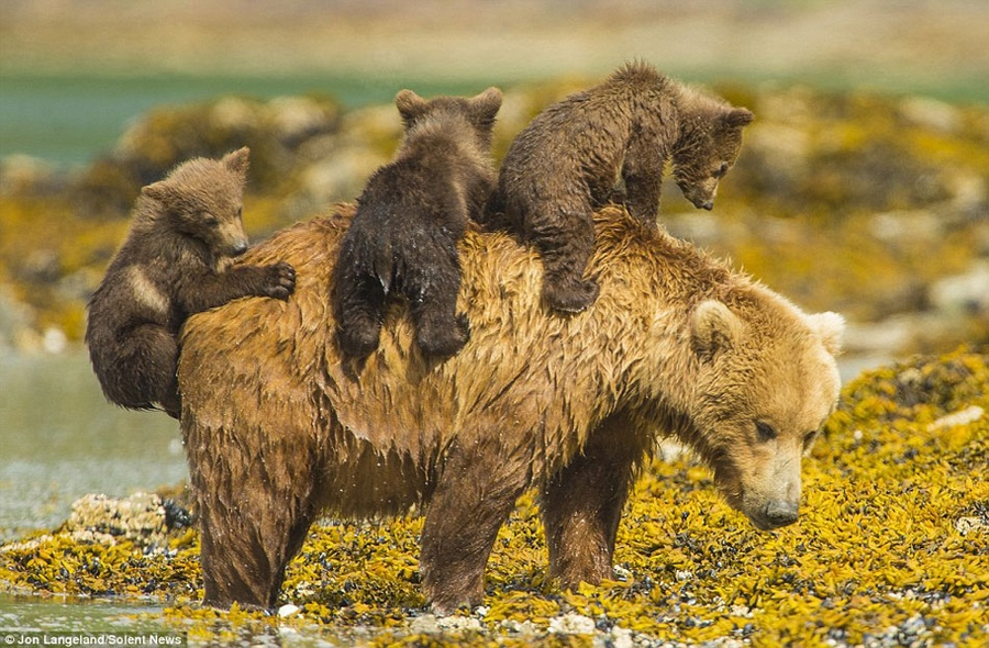 Дети и медведи 59
