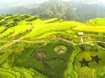 Цинтянь провинции Чжэцзян: на террасах площадью в тысячу му демонстрируются «оригинальные рисовые картины»