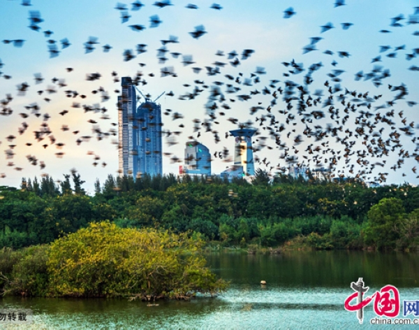 Десятка китайских городов с экологическим развитием