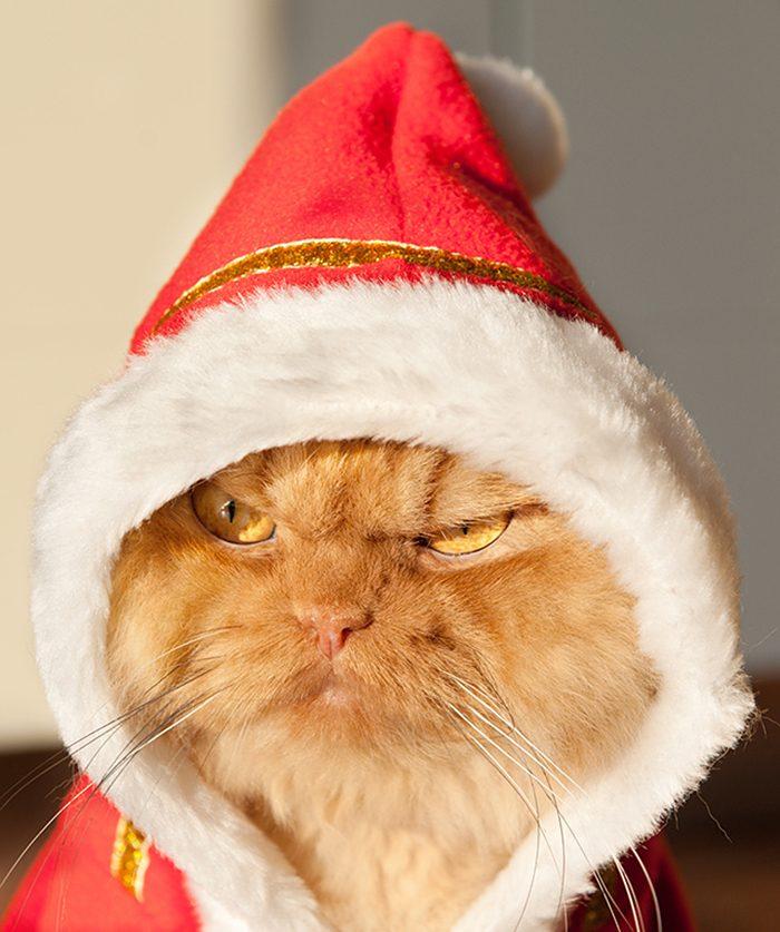 Самый суровый кот в мире – Гарфи