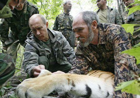 Тигр Кузя, предположительно выпущенный президентом Путиным, напал на курятник в провинции Хэйлунцзян