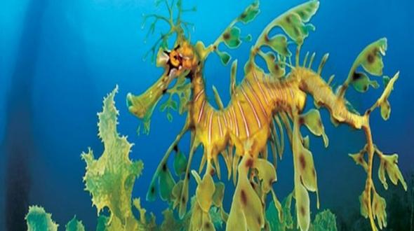15 животных, похожих на инопланетян по версии вебсайта barahonero.com