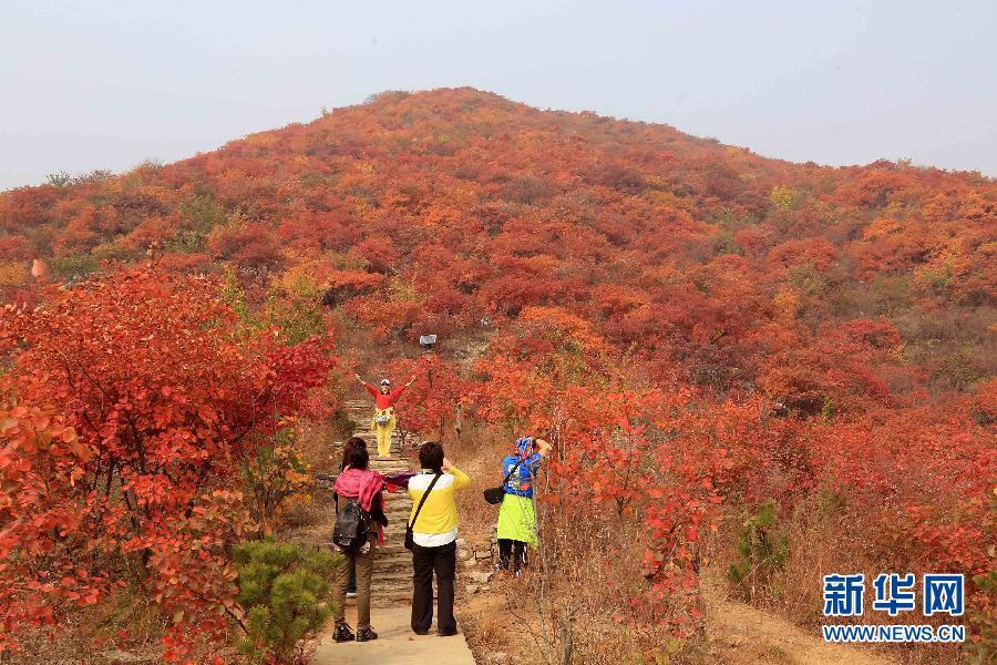 Красные листья в достопримечательности Пофэнлин в районе Фаншань Пекина
