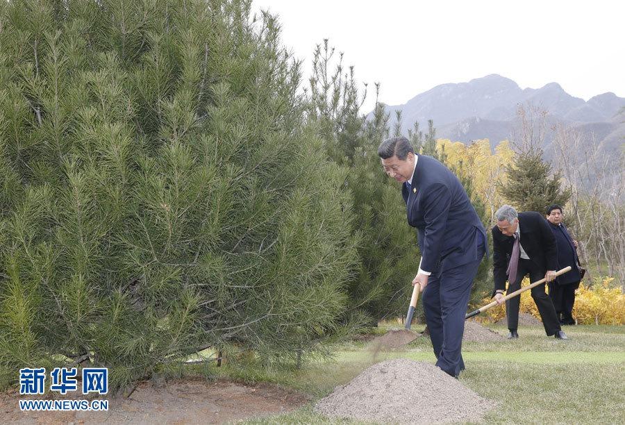 Лидеры экономик АТЭС посадили деревья дружбы
