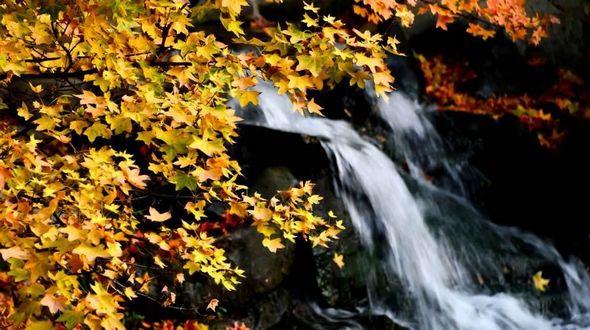 Осенние пейзажи в парке Баотуцюань г. Цзинань