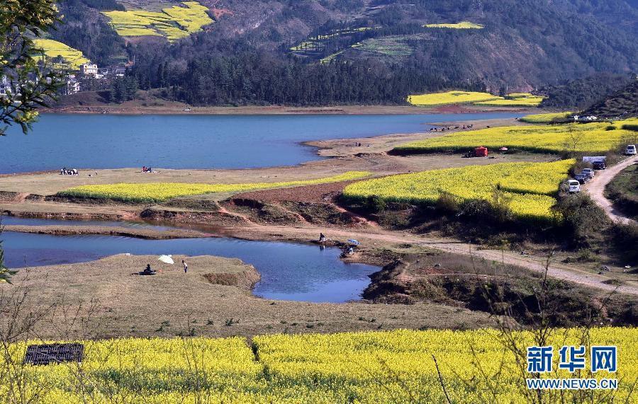 Красивый Китай: цветущие рапсовые поля встречают туристов