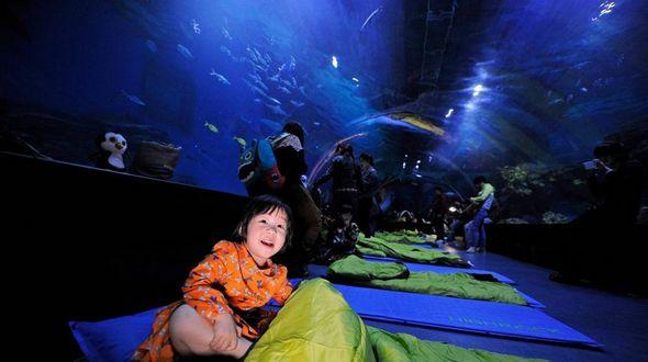 Ночь в океанариуме