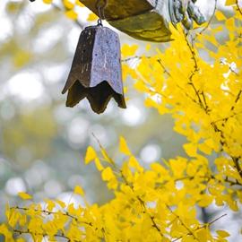 Буддийский храм на горе Сишань, Пекин: очаровательная осень