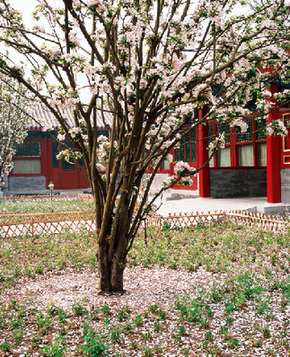 Красивая весна в Дворце князя Гуна (Гунванфу)