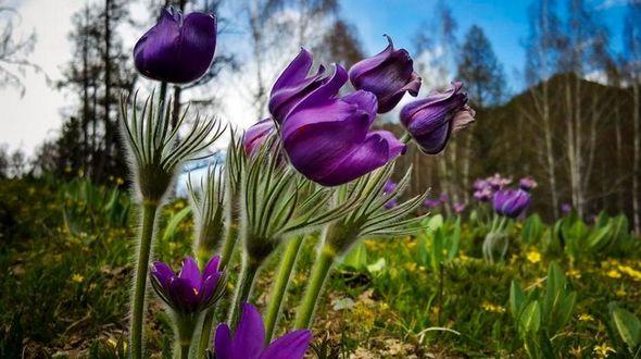 На озере Канас в СУАР наступает время самых прекрасных диких цветов