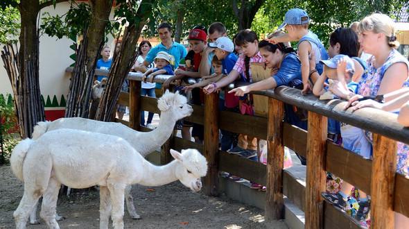Двенадцатый день рождения первого частного зоопарка в России 'Лимпопо'