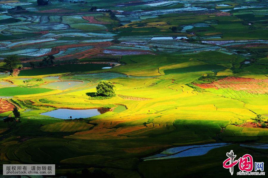Живописное рисовое поле в уезде Цюаньчжоу Гуанси-Чжуанского автономного района
