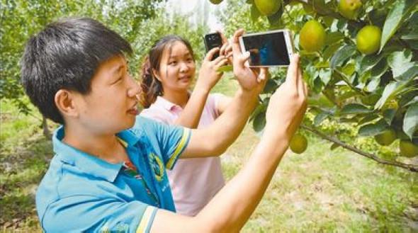 Студенты помогают крестьянам СУАР продавать фрукты через Интернет