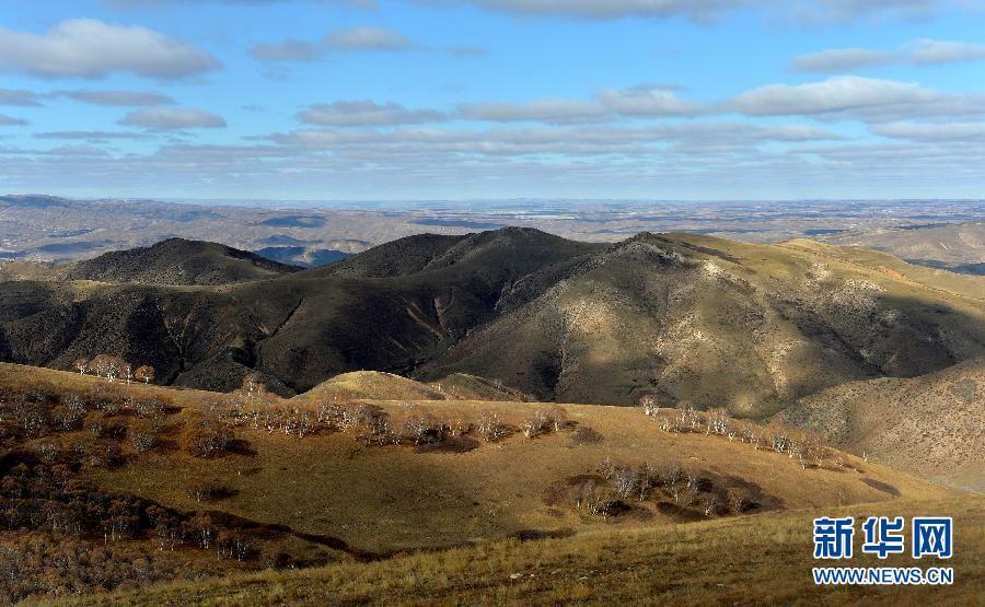 Золотая осень в заповеднике Дациншань Внутренней Монголии