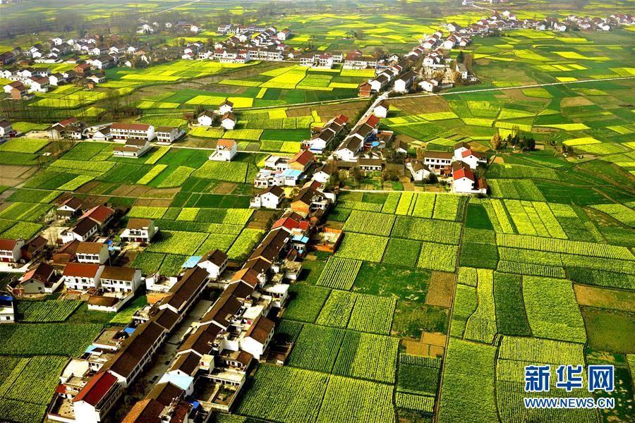 Бескрайнее желтое море цветов рапса в г. Ханьчжун провинции Шэньси