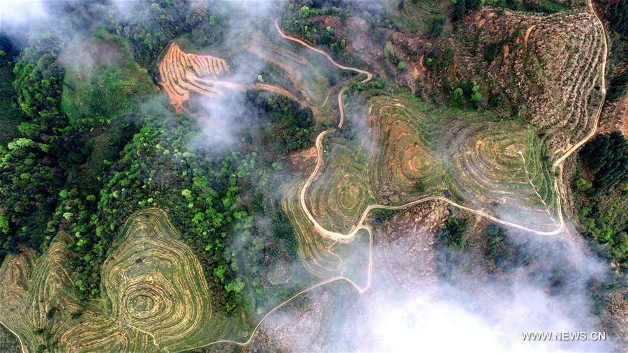 Пейзажный чайный сад в китайской провинции Гуйчжоу
