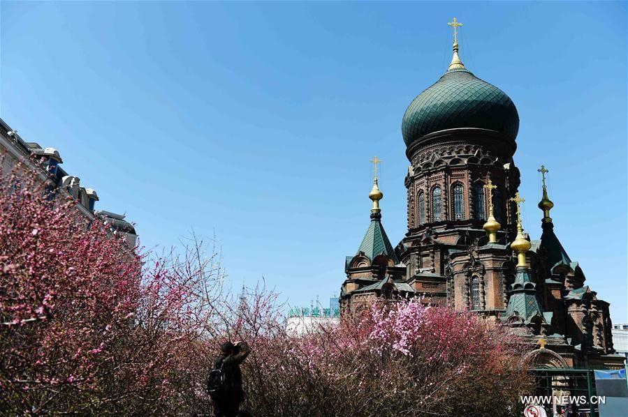 Фото: Церковь Святой Софии в Харбине