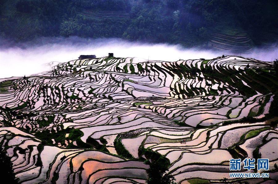 Фото: Пейзажные террасы в провинции Гуйчжоу