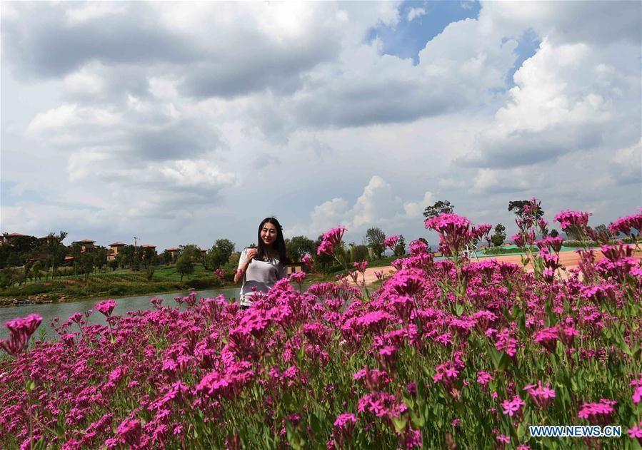 Море цветов в Юго-Западном Китае