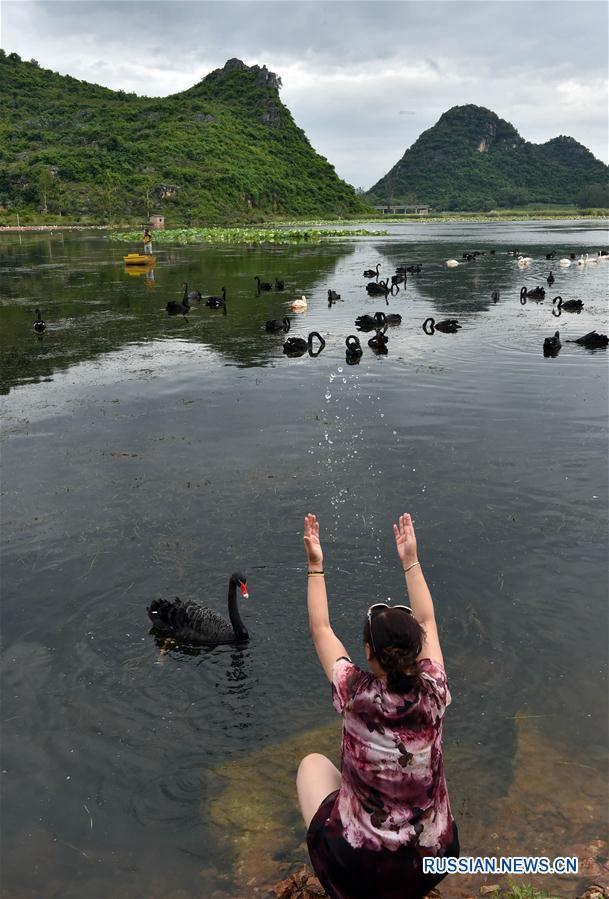 Лебединое озеро в провинции Юньнань