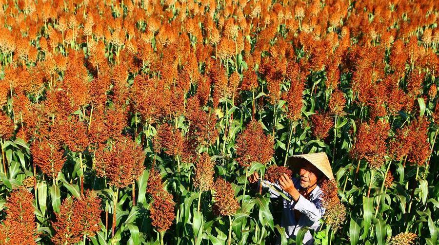 Конец лета -- пора сбора урожая
